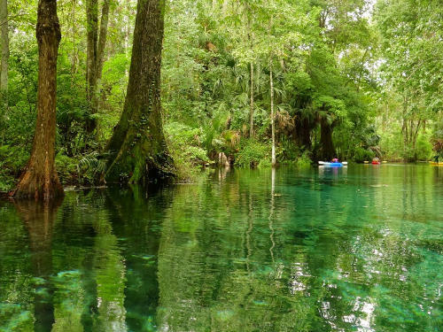 Paddeln im Silver Springs State Park in Florida