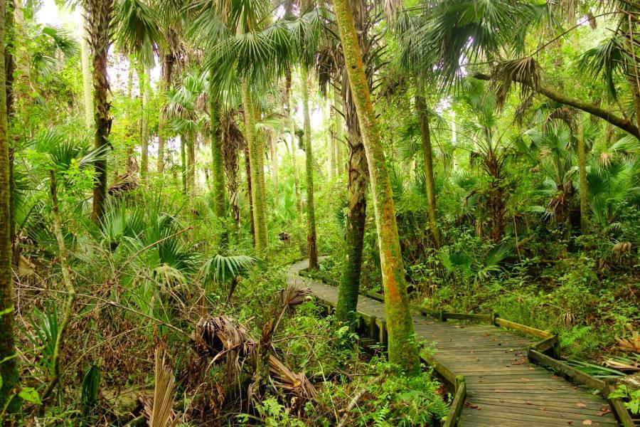 Timucuan Trail im Ocala National Forest