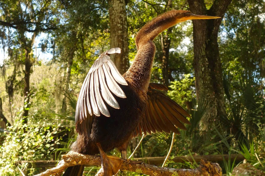 Vogel am Fort King Paddling Trail