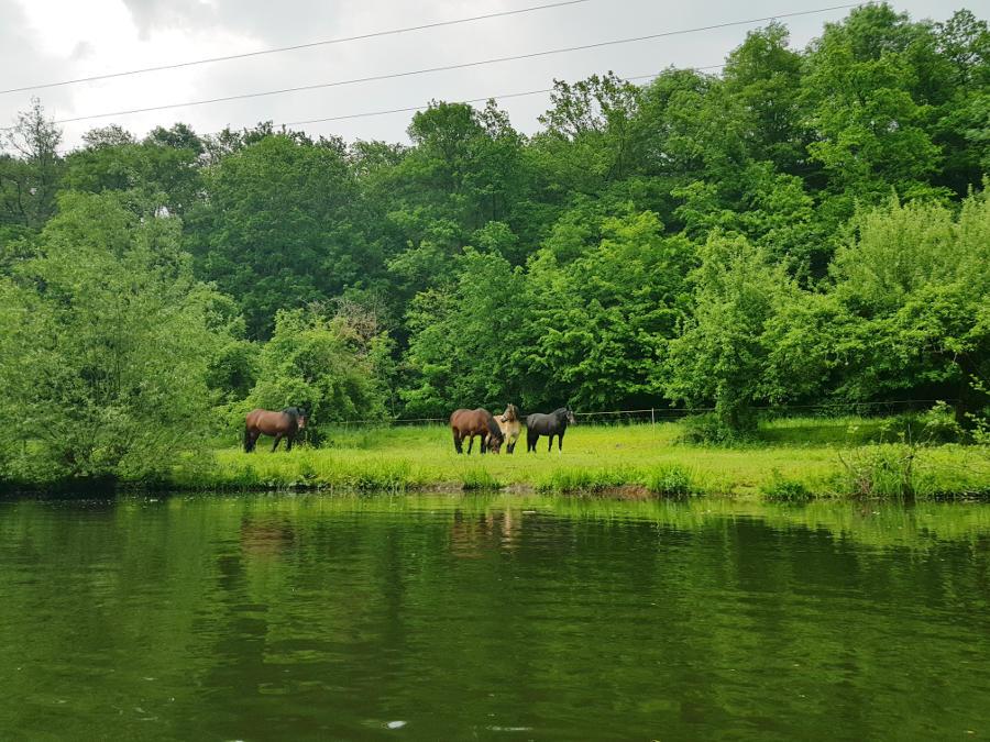 Pferde_an_der_Saale